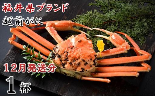 [J-1401] 【12月発送分】福井県ブランド 「越前ズワイ蟹」 0.9kg以上