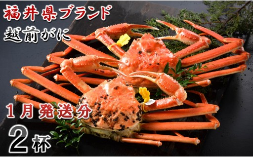 [O-1401] 【1月発送分】福井県ブランド 「越前ズワイ蟹」 0.9kg以上 2杯