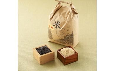 【玄米】 新米丹波産こしひかり玄米3㎏黒米300g×2