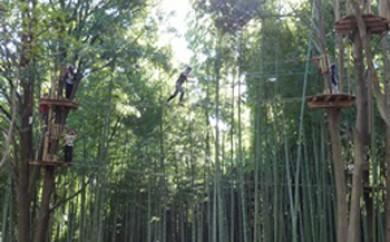 森の空中散歩!フォレストアドベンチャー・おおひら 体験チケット(上級コース、18歳以上)