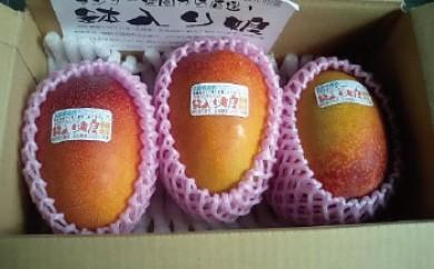 【受付終了】【先行予約】マンゴー「鉢入り娘」(ご家庭用1kg箱入り)