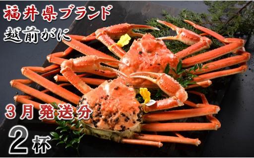 [O-1401] 【3月発送分】福井県ブランド 「越前ズワイ蟹」 0.9kg以上 2杯