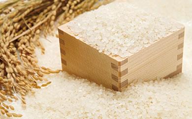 新米受付開始!北海道米といえば蘭越米! 村政ファーム「ゆめぴりか」20kg