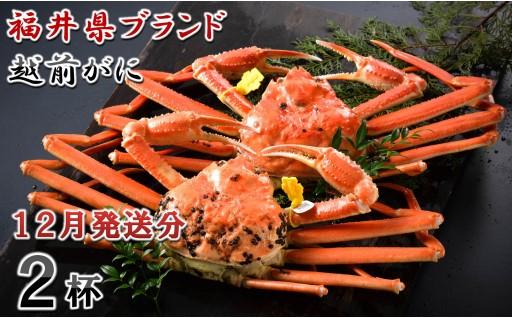 [O-1401] 【12月発送分】福井県ブランド 「越前ズワイ蟹」 0.9kg以上 2杯