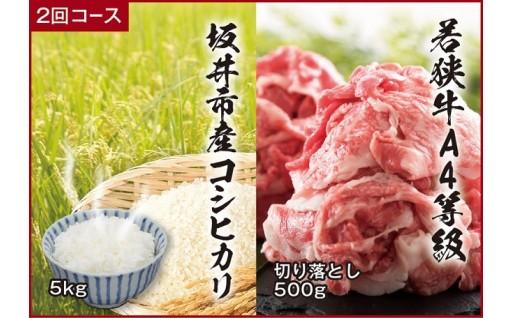 [B-3204] 【頒布会 2回コース】 坂井市産コシヒカリ 5㎏ + 若狭牛切り落とし 500g
