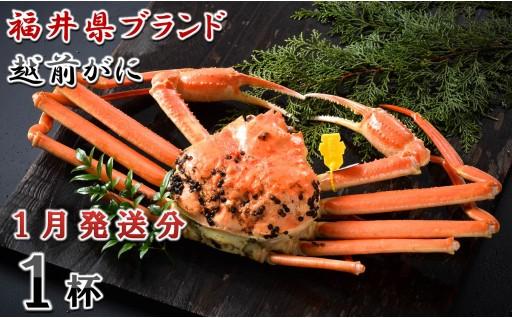 [J-1401] 【1月発送分】福井県ブランド 「越前ズワイ蟹」 0.9kg以上