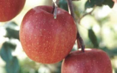 りんごの里・秋田県雄和地区で育ったりんご ふじ15kg