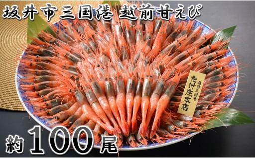 [B-1601] 坂井市三国港で水揚げされる「越前甘えび」 1.5kg! 約100尾