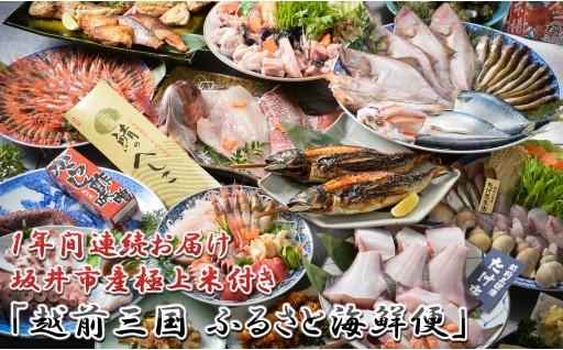 [R-1603] 【1年間連続お届け】 「越前三国 ふるさと海鮮便」+坂井市産極上米定期便