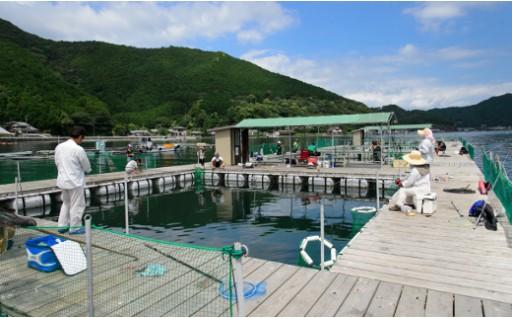 【C22】海上釣り堀貞丸の無料招待券