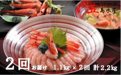 [B-2301] 【年2回お届け】 漁船直送!船内瞬間冷凍 甘えび 約1.1㎏ × 2回 計2.2㎏