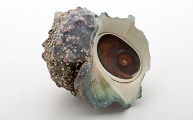 沖永良部島 世界に1つのアクセサリ作り!海の宝石!夜光貝 貝殻 フタ3個セット