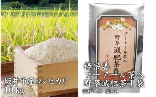 [B-3202] 坂井市産コシヒカリ 10kg + マツコDXさん愛飲!薬草減肥茶 20L