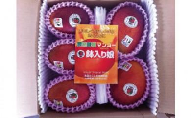 【受付終了】【先行予約】 マンゴー「鉢入り娘」(ご家庭用2kg箱入り)
