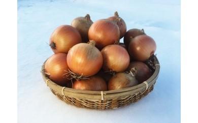佐藤農場の玉葱