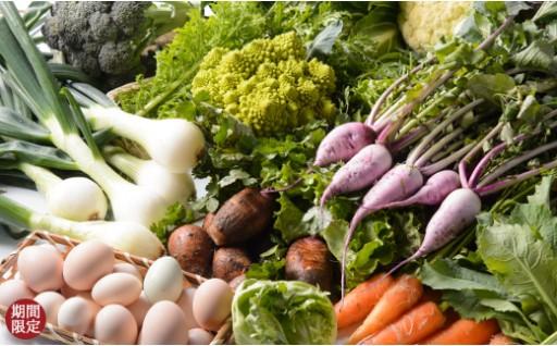 【B26】旬の野菜セット、卵16個、干物