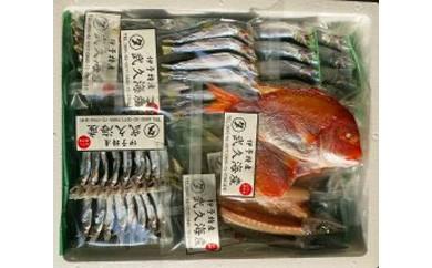 イワシ丸干し&旬の魚開きセット