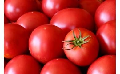 2018年受付開始!富田農園 こだわり農家の「喜茂別産 ぜいたくトマト」