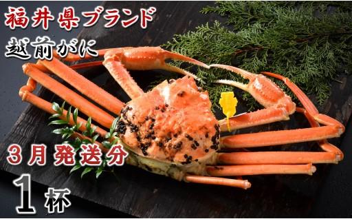 [J-1401] 【3月発送分】福井県ブランド 「越前ズワイ蟹」 0.9kg以上