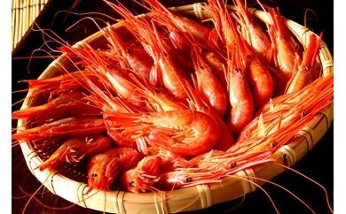 入荷!野付産北海シマエビ・特大1kg<野付漁業協同組合>【BC17-C】