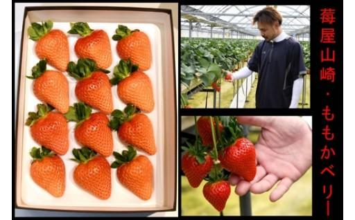 334 莓屋山崎が作った大粒いちご掛川産「ももかベリー」9粒~12粒