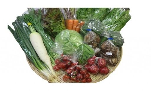 【B-47】南国土佐の太陽の恵み季節の野菜セット(寄附額10,000円コース)