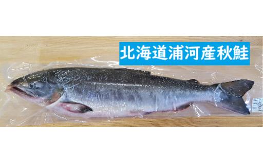 [08-271]北海道浦河産 秋鮭 鮮魚急速冷凍品