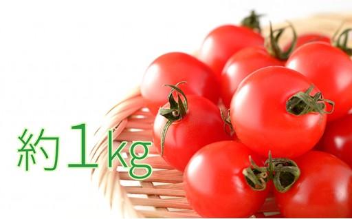 [№5871-0141]今金産ミニトマト約1kg