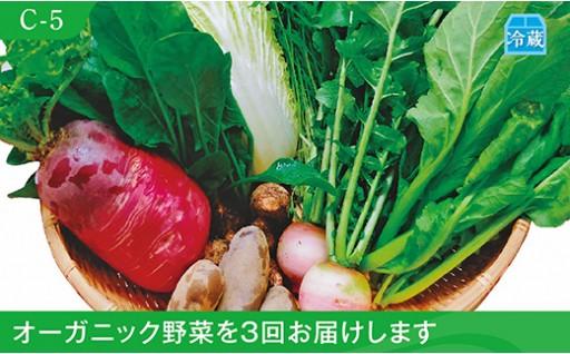 C-5 季節のオーガニック野菜セット8種 【3回セット】