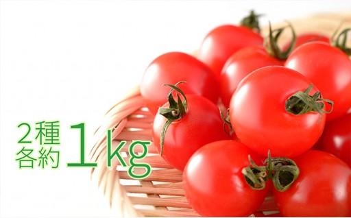 [№5871-0142]今金産ミニトマト2種 各約1kg