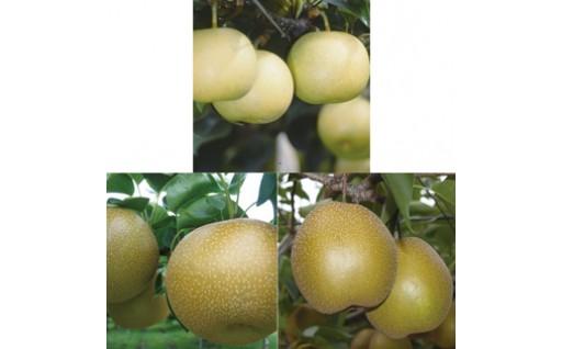 【18302】鳥取県産梨 食べ比べコースB(全3回のお届け)【髙島屋選定品】