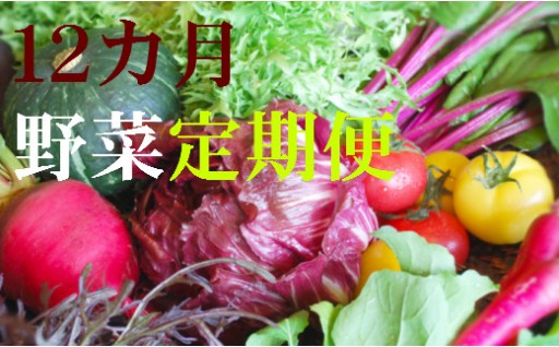 T-5 野菜★12カ月定期便 香南市のお野菜詰め合わせコース