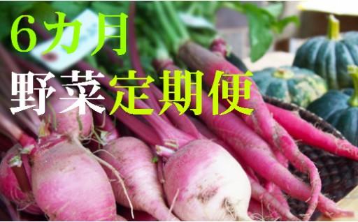 L-5 野菜★6カ月定期便 香南市のお野菜詰め合わせコース