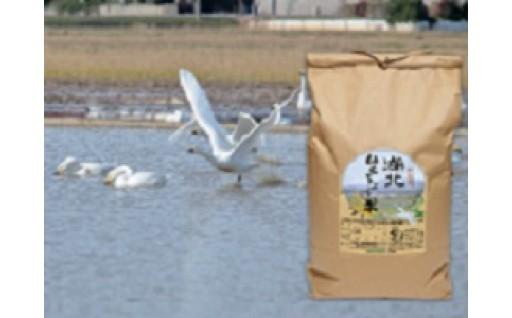 (2)-01農薬科学肥料不使用 島根県エコロジー農産物 湖北白鳥米 玄米8.5㎏