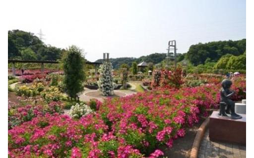 花フェスタ記念公園 パスポート+入園券セット(A)