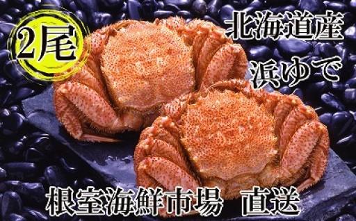 CA-14045 根室海鮮市場<直送>北海道産浜茹で毛ガニ2尾[366647]