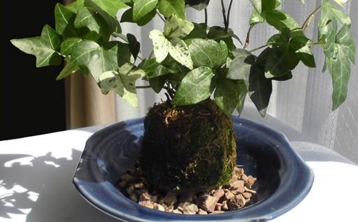 474.石州瓦のセラミックサンドを使った苔玉・石州亀山焼皿セット