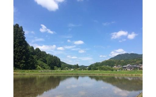 FS-02 世界かんがい施設遺産・国登録記念物の「立梅用水」の水で減農薬米をあなたのために育てます!(20㎏)