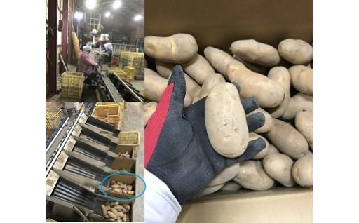 010023. 豊作会農園 メークイン[LMサイズ:10kg](30セット限定)