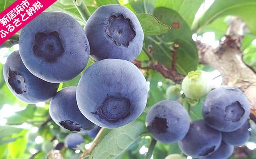 旬にお届け!無農薬栽培 完熟生ブルーベリー1500g、完熟手作りブルーベリージャム4瓶セット