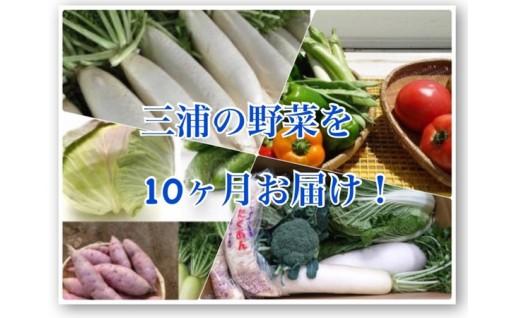 10-34【三浦野菜を10か月間毎月お届け!】季節のお野菜定期便(10回配送)