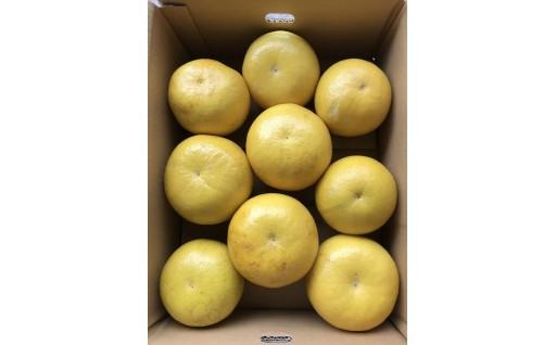 小野果樹園の文旦【家庭用】5kg(2L~4L)