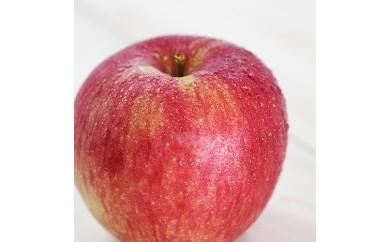 りんごの王様「ふじリンゴ」!長野県産 約5kg 秀品【予約受付・秋~冬発送】【A127】
