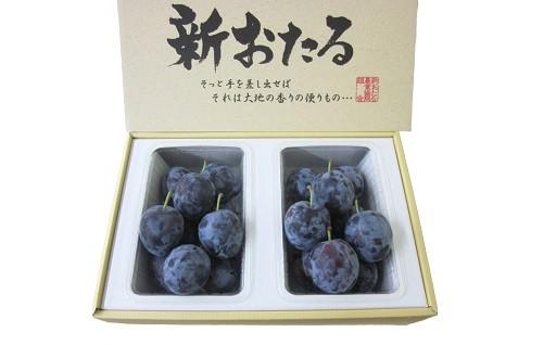 【北海道8月の品種(爽快)】JA新おたる生のプルーン(減農薬栽培)