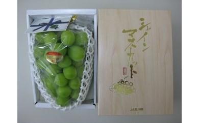 三豊市産 シャインマスカット 1房化粧箱