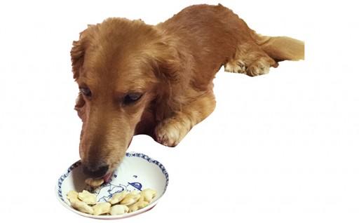 [№5525-0173]犬ちゃんクッキー詰合せセット