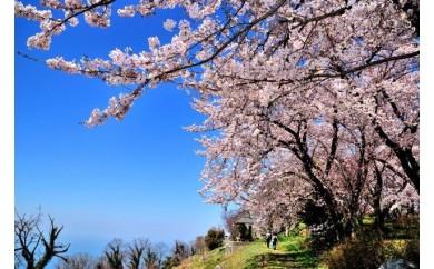 みとよの絶景ポストカード 紫雲出山の桜