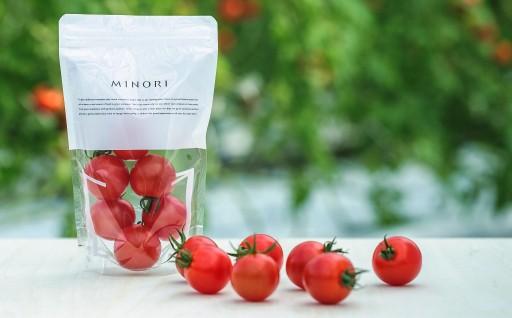 10-MS-2 フルーツトマト MINORI 6パックセット