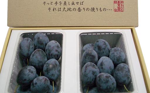 【北海道9月の品種(甘い)】JA新おたる生のプルーン(減農薬栽培)