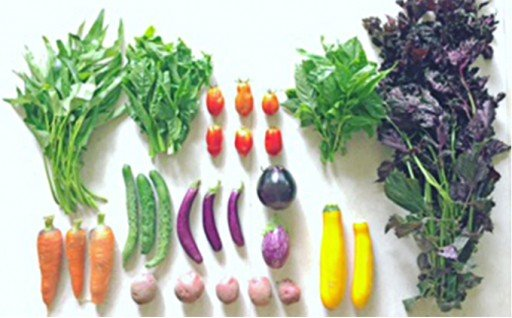 [№5735-0262]瀬戸内産 旬の野菜セット